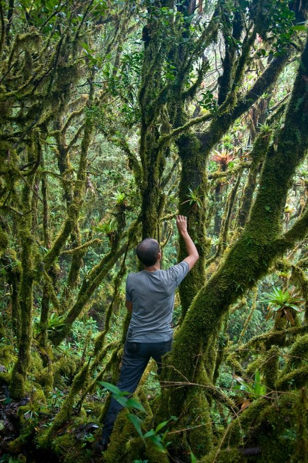 Daniel looking for orchids - Cerro Arbolado