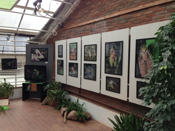 "My ""Orchid Photo"" -exhibition at the Botanical Gardens - Gothenburg, Sweden."